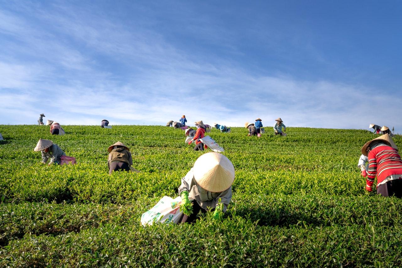 farmers on a field